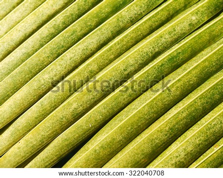 yellow palm leaf texture