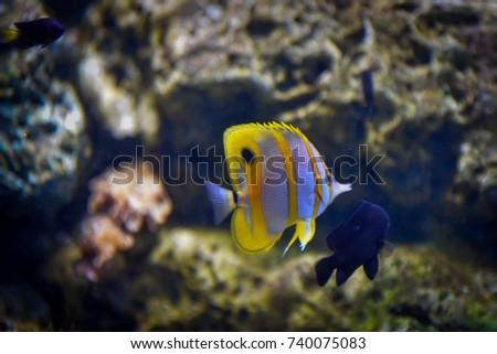 Yellow parrot fish swimming in beautiful natural glass cabinets.