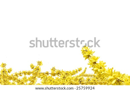 Yellow plant for your Easter decoration