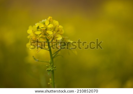 yellow plant on a blurred background - stock photo