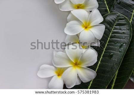 Kazitafahnizeer S Portfolio On Shutterstock