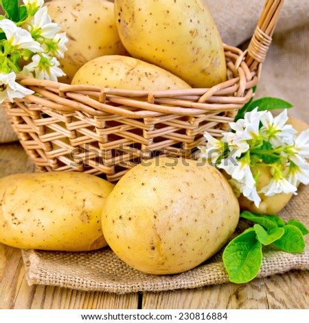 Yellow potato tubers with a flower on sackcloth, and in a wicker basket on a wooden boards background - stock photo
