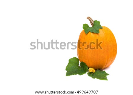 Yellow pumpkin with leafs and flower on white background with space for text
