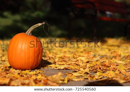 Yellow pumpkins on yellow autumn leaves with dark backgrounds