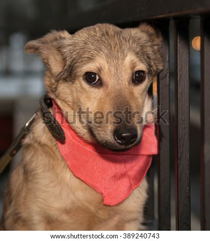 Yellow puppy in pink bandanna outside