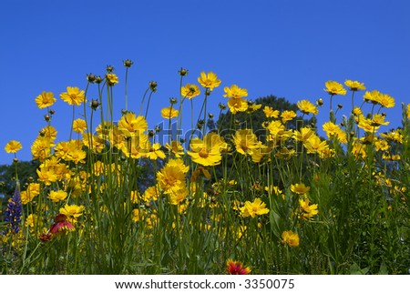 Yellow, purple and red yellow flowers in an open field