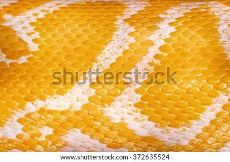 Yellow Python Skin Background - stock photo