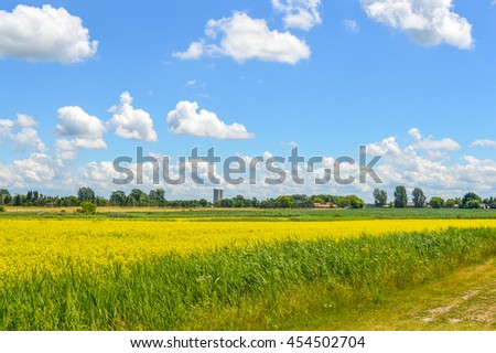 Yellow rapeseed flowers on field with blue sky, clouds and forest, Quebec, Canada