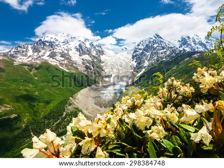Yellow Rhododendron Bush and Caucasus Mountain Glacier between mountain peaks - stock photo