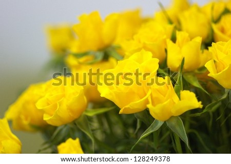 yellow rose flower bouquet - stock photo