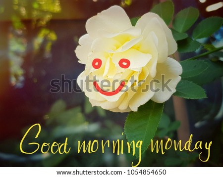 Yellow rose flower smile good morning stock photo royalty free yellow rose flower smile good morning concept mightylinksfo