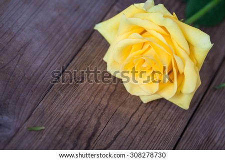 yellow rose on wooden table - stock photo