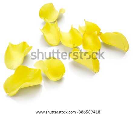 Yellow rose petals isolated on white background - stock photo
