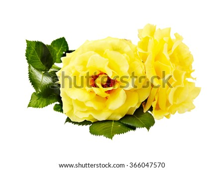 yellow roses bouquet on a white background - stock photo