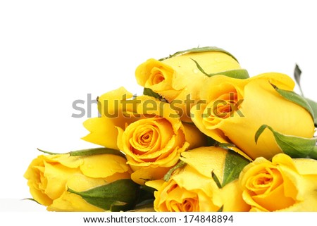 Yellow roses with water drop isolated - stock photo