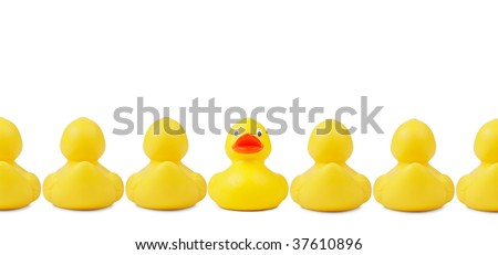 Yellow rubber ducks in a row. An individalist is sticking out the crowd. Clipping path included.