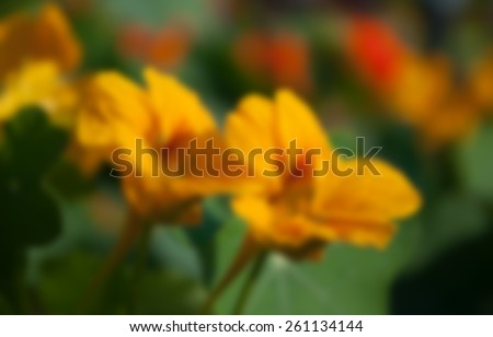 Yellow seasonal flowers blooming with dark background, blurred, out of focus, artistic, spring, Kolkata, India - stock photo