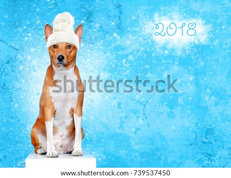 Yellow sitting dog wearing white knitted hat and scarf on blue background