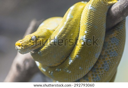 Yellow snake on a branch . - stock photo