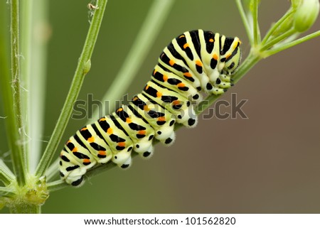 yellow spotted caterpillar sit on plant - stock photo