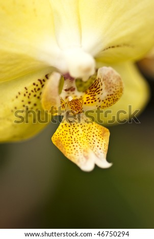 Yellow spotted orchid - stock photo
