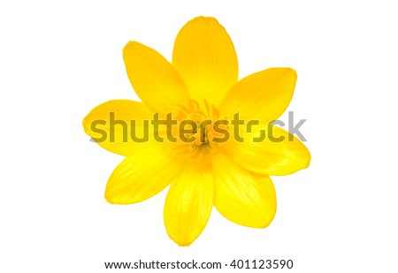 yellow spring flower isolated on a white background - stock photo