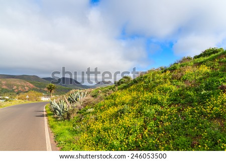 Yellow spring flowers growing along road to Haria village, Lanzarote island, Spain - stock photo