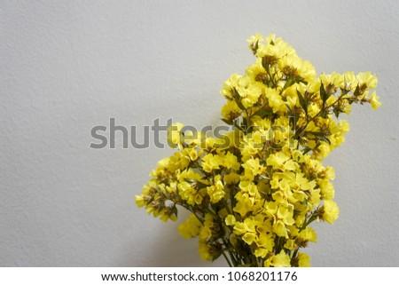 Yellow statice flower on white background stock photo edit now yellow statice flower on white background statice is grown as both a cut flower and mightylinksfo
