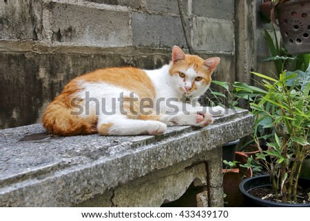Yellow Street Cat in Thailand