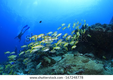 Yellow stripe trevally