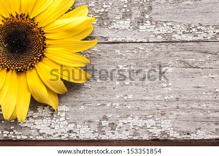 Yellow sunflower on vintage wooden table with cracked white paint