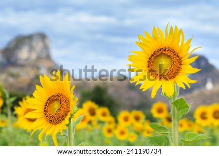 yellow sunflowers and mountain background - stock photo