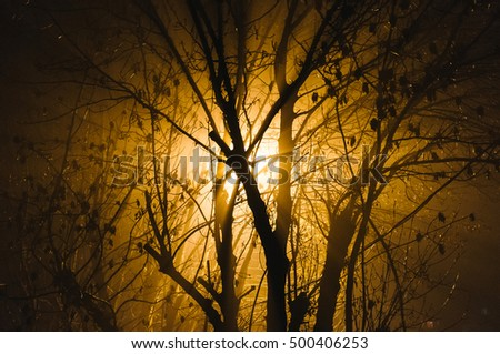 Yellow sunlight through bare tree limbs.