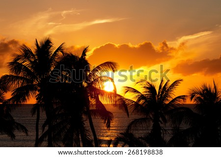 yellow sunset with palm trees in Antigua