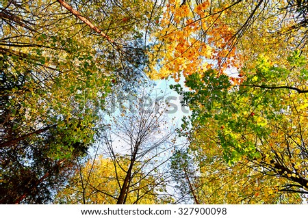 Yellow tops of forest trees on the background of gray cloudy sky in autumn  day - autumn landscape - stock photo