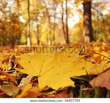 yellow tree leaf - stock photo