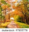 Yellow Trees Shiny Outdoor - stock photo