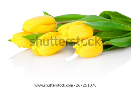 Yellow tulip flowers are isolated on a white background - stock photo