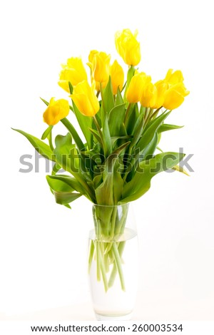 yellow tulip on a white background standing in a transparent vase - stock photo