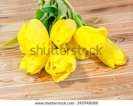 Yellow tulips flowers, green leaves, wood background, close up.