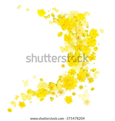 Yellow various flowers and butterflies breeze, each studio photographed and isolated on absolute white - stock photo