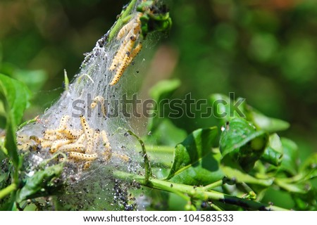 yellow varmint caterpillar close-up eating leaves