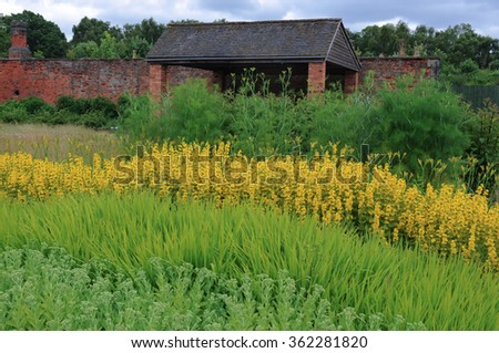Yellow Verbascum and Asparagus Plants in a Walled Kitchen Garden near the Rural Village of Milford in Staffordshire, England, UK - stock photo