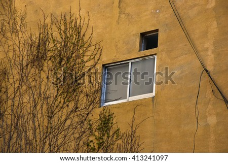 Yellow wall and dry tree