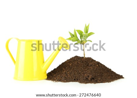 Yellow watering can with green plant in soil on white background - stock photo