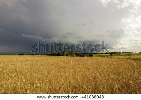 Yellow wheat field and stormy rain clouds