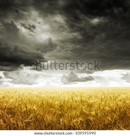 Yellow wheat field under dark storm cloud sky - stock photo
