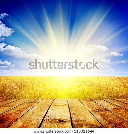Yellow wheat field under nice sunset cloud sky background - stock photo