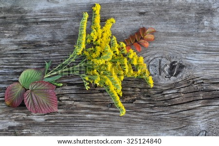 Yellow Wild Flowers and Raspberry and Dog Rose Leaves on the Old Board - stock photo