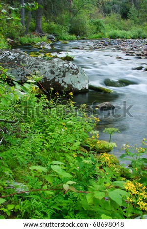Yellow wild flowers bloom along a flowing Montana stream. - stock photo